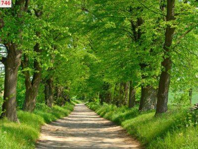 tranh dán 3d rừng cây
