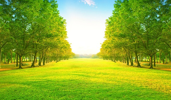 tranh dán tường rừng cây xanh