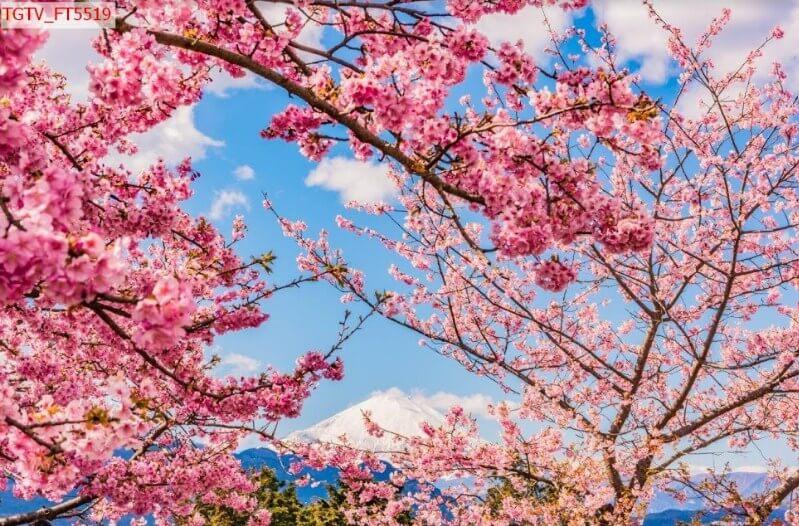 tranh hoa cho màu sắc tươi