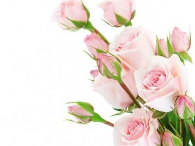 tranh in 3d hoa hồng