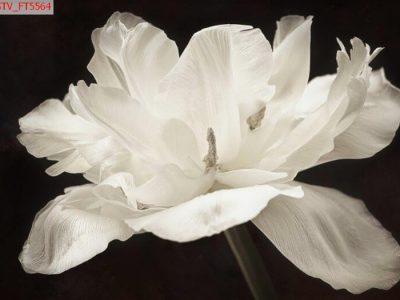 tranh treo hoa lá